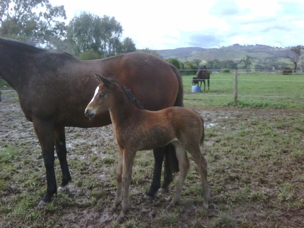 All My Loving as a foal